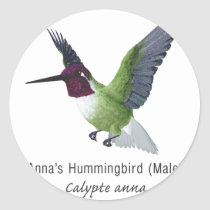 Anna's Hummingbird Male with Name Classic Round Sticker