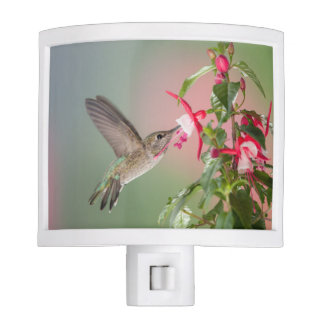 Anna's Hummingbird night light