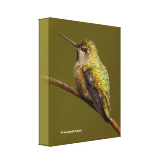 Anna's Hummingbird on the Scarlet Trumpetvine Canvas Print