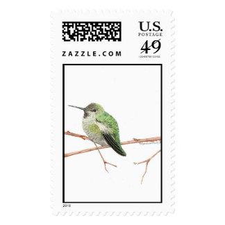 Anna's Hummingbird Stamps