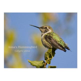 Anna's Hummingbird Postcard