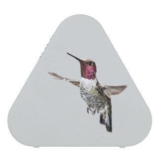 Anna's Hummingbird speaker