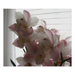 Anne's Orchid Poster