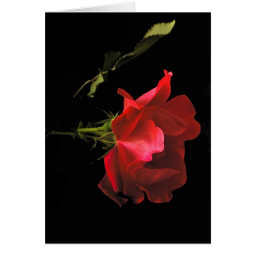 Anniversary Rose Greeting Cards