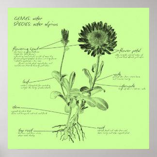 Annotated Botanical Print