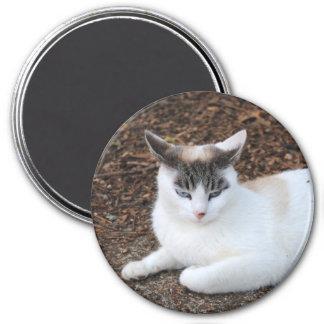Annoyed Cat Magnet