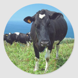 Annoyed cow classic round sticker