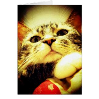 Annoyed kitty card