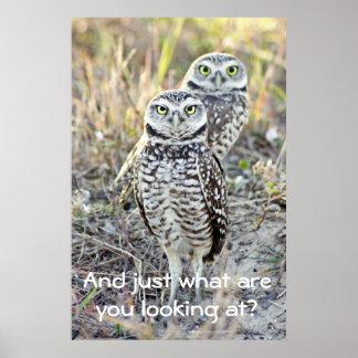 Annoyed Owl Poster
