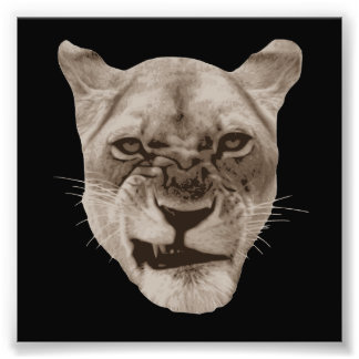 Annoyed Snarling Lion Cat Photo Print