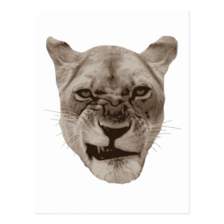 Annoyed Snarling Lion Cat Postcard