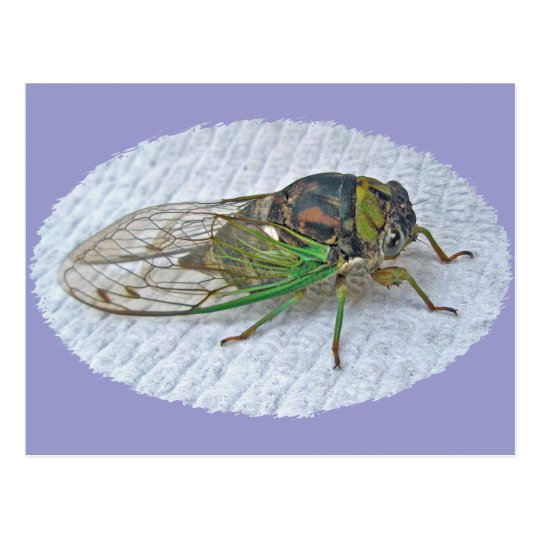 Annual Cicada Coordinating Items Postcard