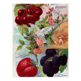 Annual Fruit Catalog 1896 Postcard