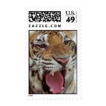 Año de sello del tigre