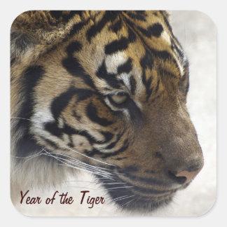 Año de Sumatran del gato grande de la foto de la Pegatina Cuadrada