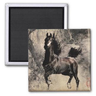 Año del caballo 2014 - arte de la pintura china imán cuadrado