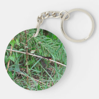 anole in florida showing off lizard animal Double-Sided round acrylic keychain