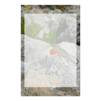 anole in florida showing off male against rocks stationery