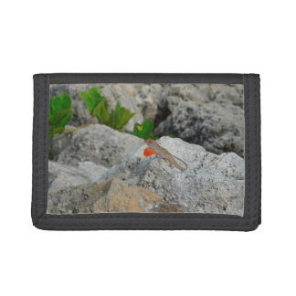 anole in florida showing off male against rocks tri-fold wallets