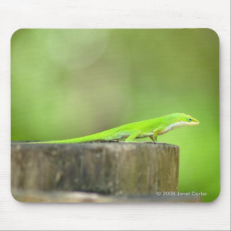 Anole  Lizard Mousepad