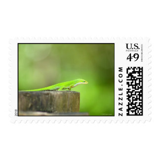 Anole Lizard Postage