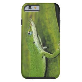 Anole verde, carolinensis del Anolis, adulto en la Funda De iPhone 6 Tough