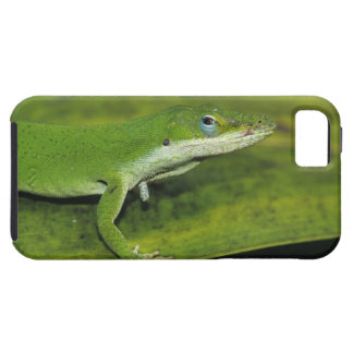 Anole verde, carolinensis del Anolis, adulto en la iPhone 5 Case-Mate Coberturas