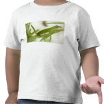 Anole verde masculino, carolinensis del Anolis, en Camiseta