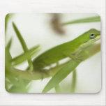 Anole verde masculino, carolinensis del Anolis, en Alfombrilla De Raton