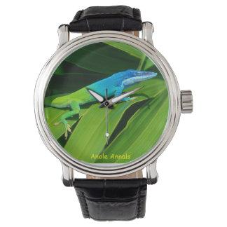 Anole Watch: Anolis allisoni Watch