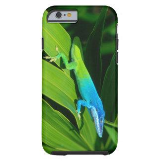 Anolis allisoni iphone 6 case