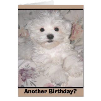ANOTHER BIRTHDAY? Maltese Puppy Greeting Card