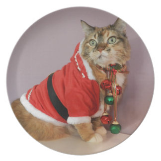 Another Christmas Santa cat Party Plate