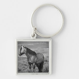Another great Sand Wash Basin Mustang Silver-Colored Square Keychain