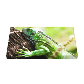 another green day gallery wrapped canvas