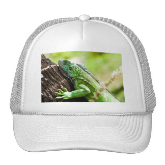 another green day trucker hat