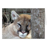 Another monday cougar greeting card
