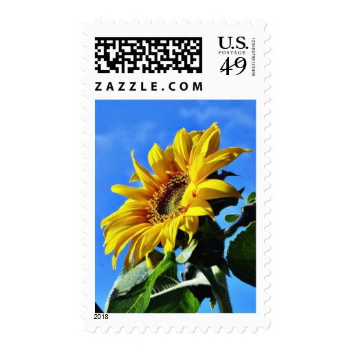 Another Of The Sunflowers On My Balcony Stamp