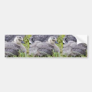 Ansarón del ganso de Canadá que cacarea Etiqueta De Parachoque