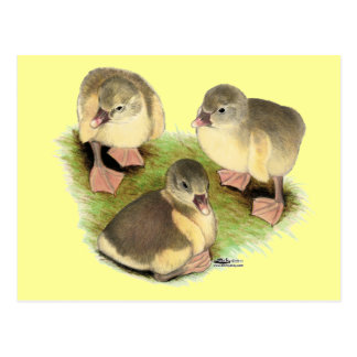 Ansarones de color de ante de Pomeranian Postal