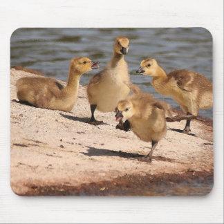 Ansarones Mousepad de los gansos de Canadá