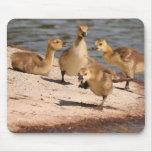Ansarones Mousepad de los gansos de Canadá Alfombrilla De Ratón