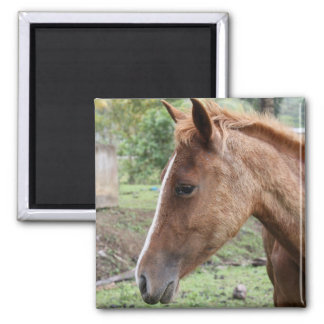 Anse Ger2 2 Inch Square Magnet