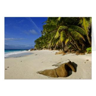 Anse Victorin Beach Card