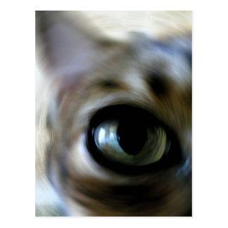 Ansel's Eye Postcard