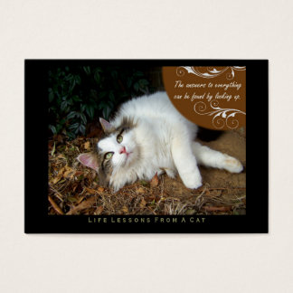 Answers Life Lessons From a Cat ACEO Art Cards