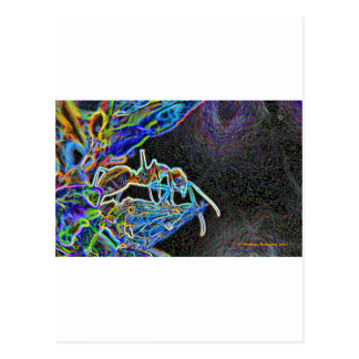 ant a1 postcard