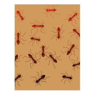 Ant antics. postcard