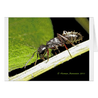 ant b card