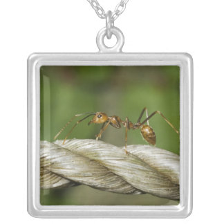 Ant Crossing Abaca Rope Necklace